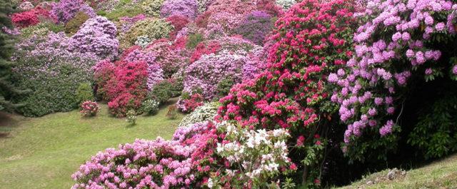 Primavera in festa nei grandi giardini d'Italia